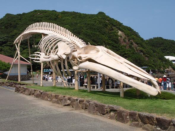 Tachi Town Municipal Whale Museum of Art (Wakayama)