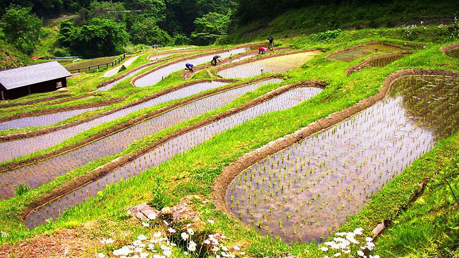 Rice Terrace, Sanazawanomori (Gunma)