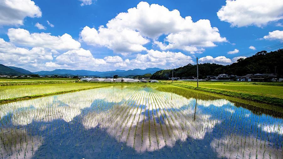 Paddy fields (Kumamoto)