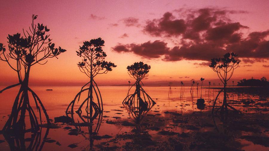 Nagura Bay (Okinawa)